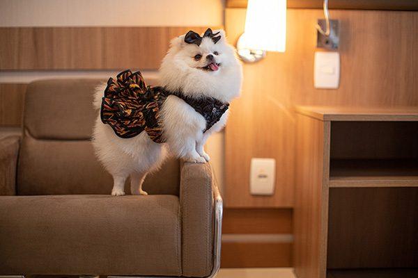 hotel pet friendly em brasilia